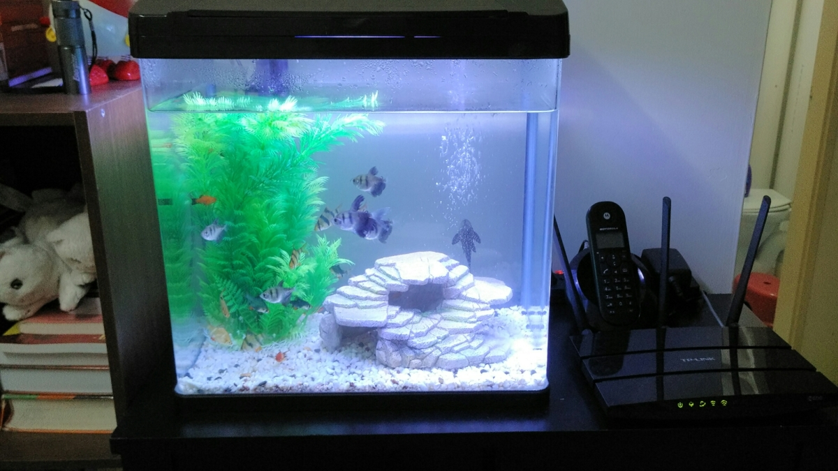 Day 7: Project Aquarium