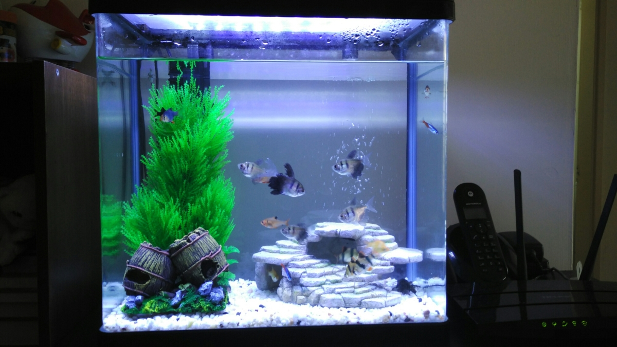 Day 11: Project Aquarium